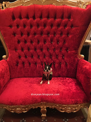 Sinead the small dog in a red chair