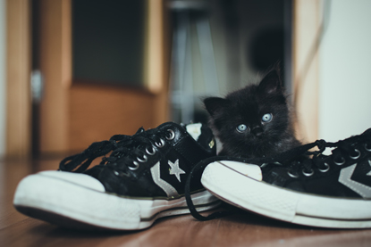 a tiny black kitten sitting next to some trainers