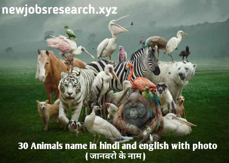30 Animals name in hindi and english with photo ( जानवरो के नाम )