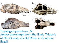 http://sciencythoughts.blogspot.co.uk/2016/03/teyujagua-paradoxa-archosauromorph-from.html