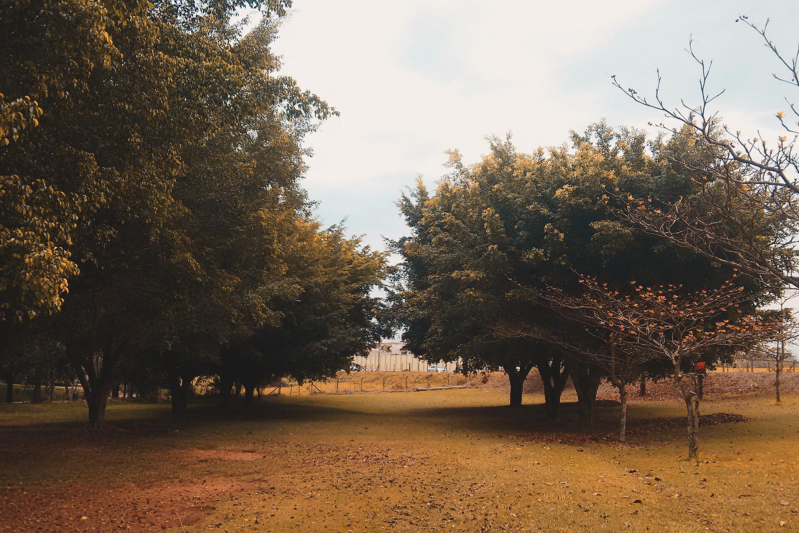 estacionamento cheio de árvores paulínia