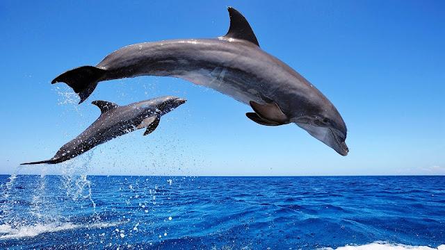 El salto de los delfines