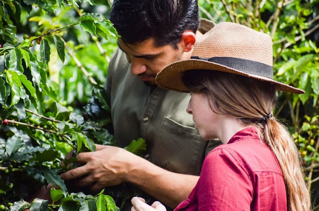 how to start coffee tree growing business selling trees