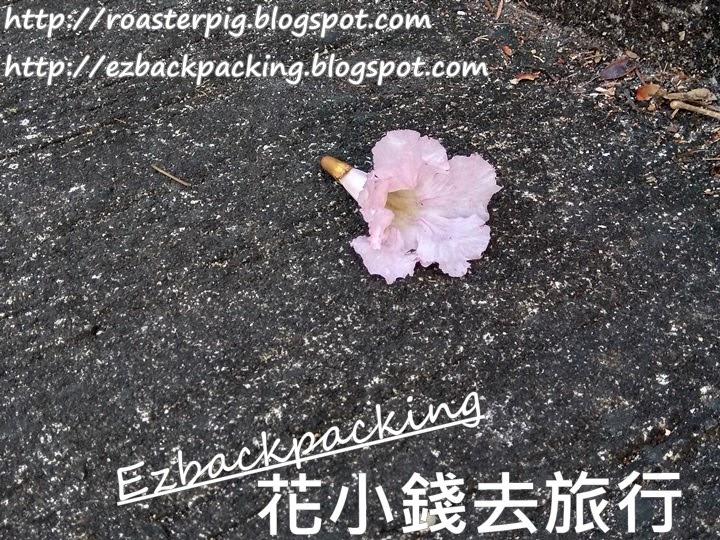 粉白風鈴木