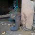 Fallece la elefante Gira del Parque Bararida
