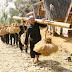 Mengenal Masyarakat Adat Kasepuhan Banten Kidul (Bagian 1)