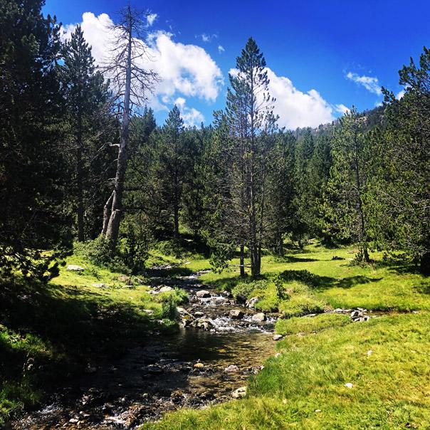 Paseo por el bosque. Grau Roig.