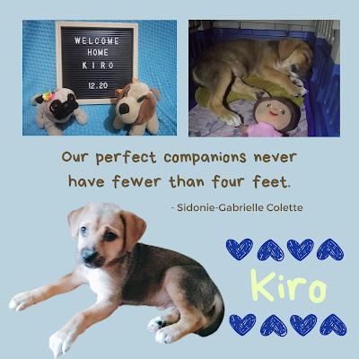 Our Pet Dog, Kiro