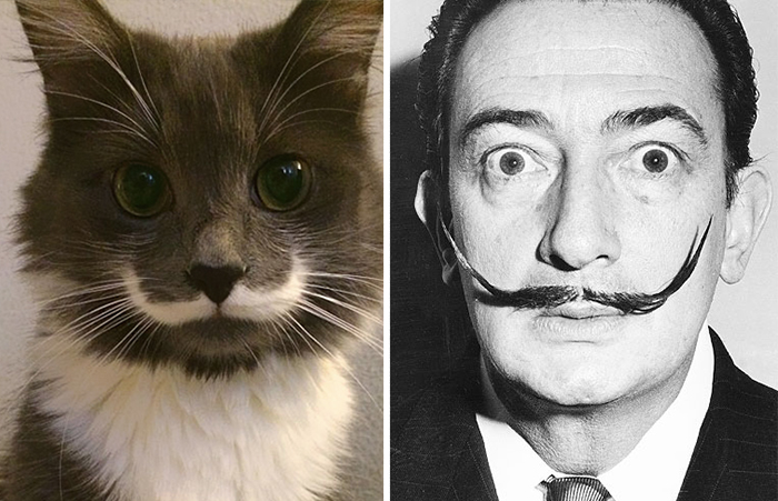 Hamilton... o gato hipster que se parece com Salvador Dalí