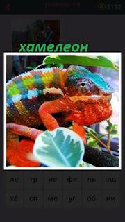 среди веток дерева сидит цветной хамелеон