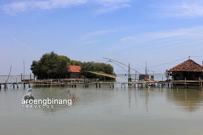 taman mangrove morosari demak