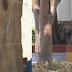 Πασίγνωστος τραγουδιστής ξεμovάχιασε 18χρονη πίσω από δέντρο στις διακοπές του το Σαββατοκύριακο και έγινε χαμός!