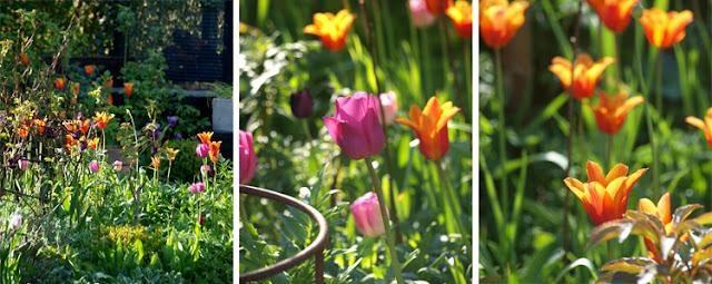 Farvefest i haven