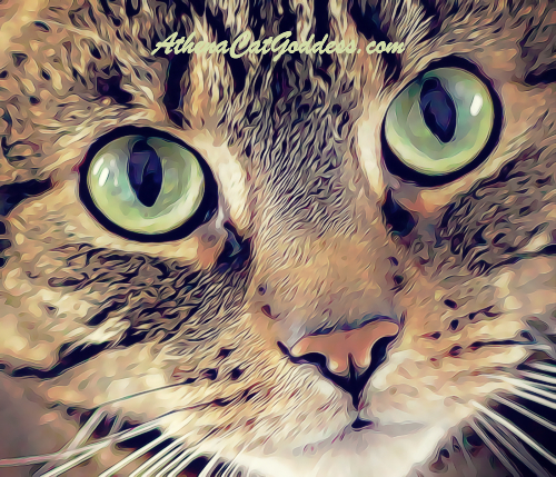 tabby cat art close up with big eyes staring into camera