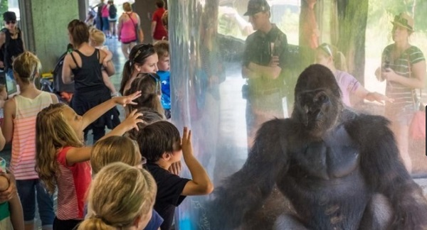 Travel to Nebraska: Information about the largest zoo in the world