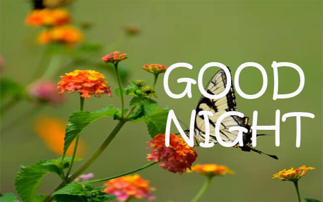 Gud Night Flower Images