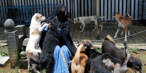 Perempuan Bercadar Pelihara 70 Anjing Liar