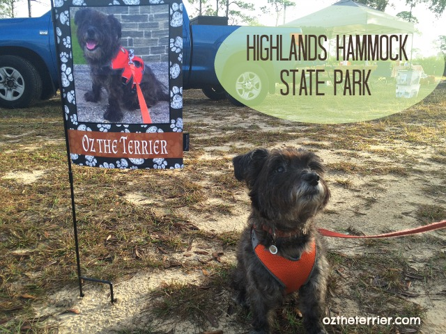 Oz the Terrier with his Flagology garden flag at his campsite in Highlands Hammock State Park, Sebring, Florida