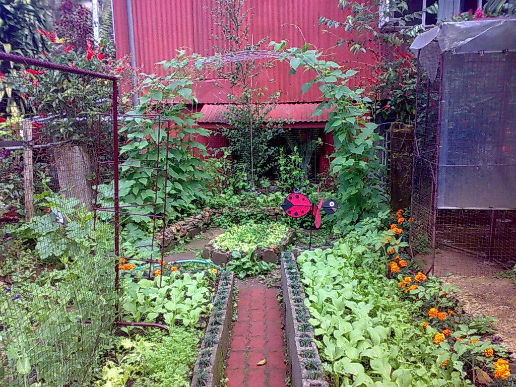Backyard Gardening: Companion Planting