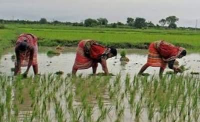 बिहार किसान पंजीकरण |आवेदन |2020 Bihar kisan panjikaran