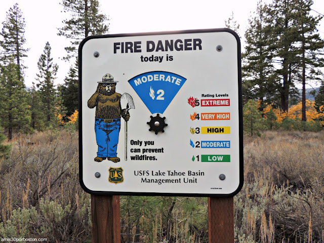 Oso Smokey en Taylor Creek, Lago Tahoe (California)
