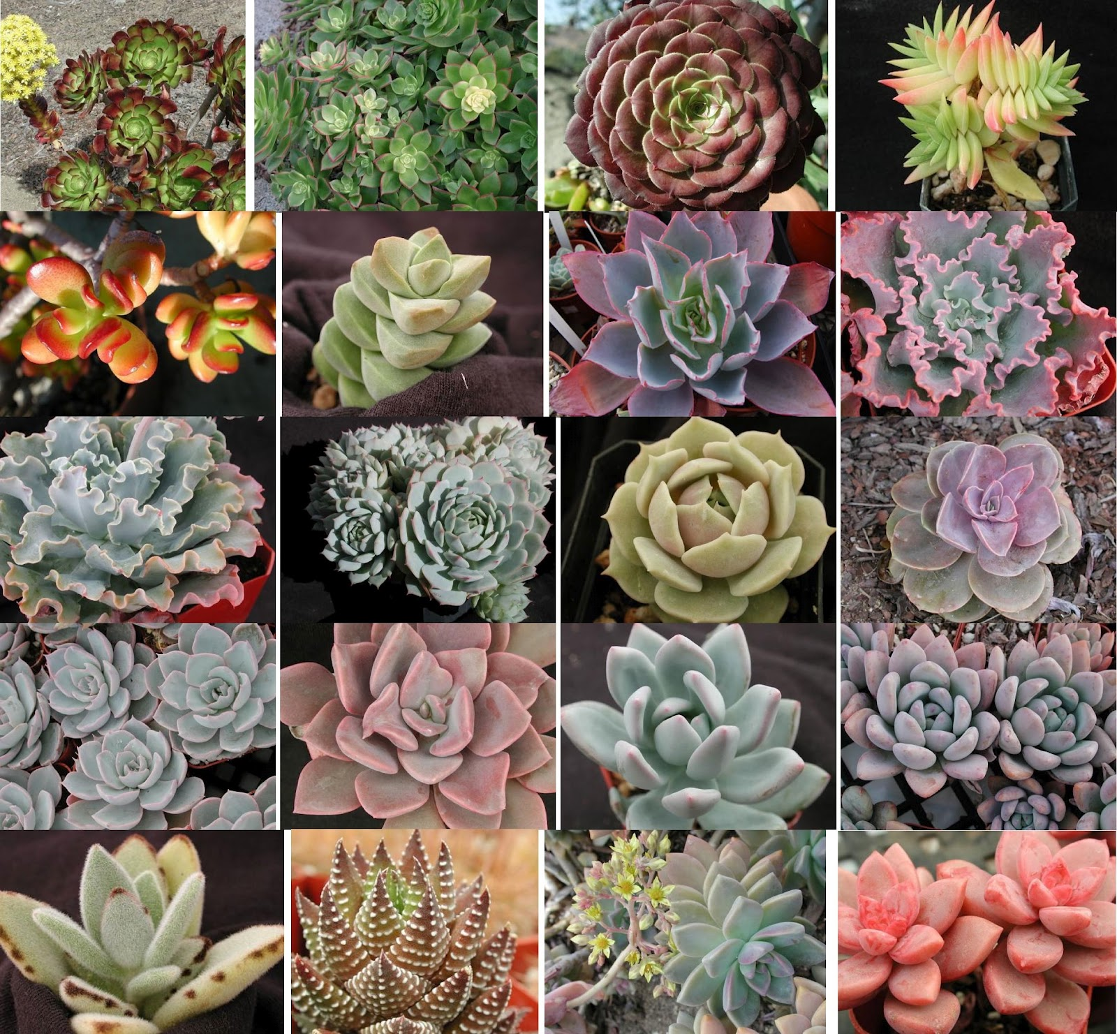 Kinds Succulent Plants