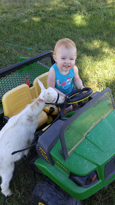 "The New ""Kids"" on the Farm - Bottle Goat project"