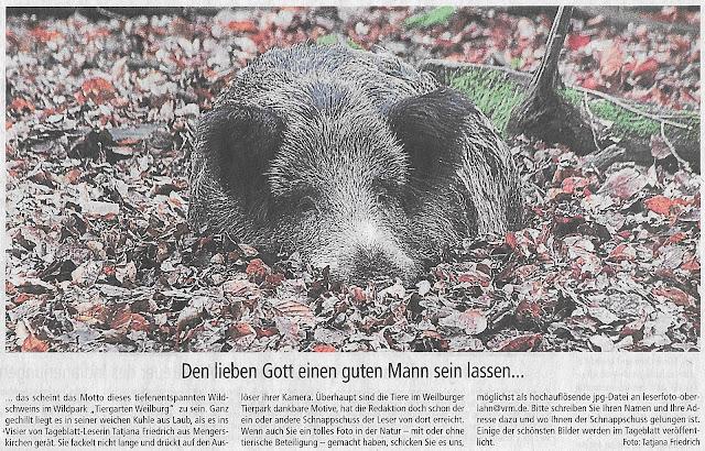 Weilburger Tageblatt,Wildsau