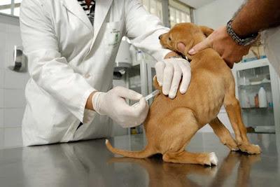 Centro geriátrico para perros