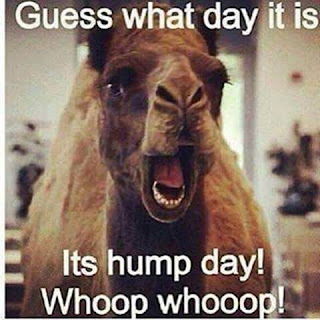 funny hump day memes camel