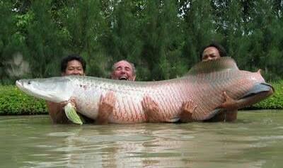 Ikan Predator ini Ternyata Banyak di Pelihara di Akuarium