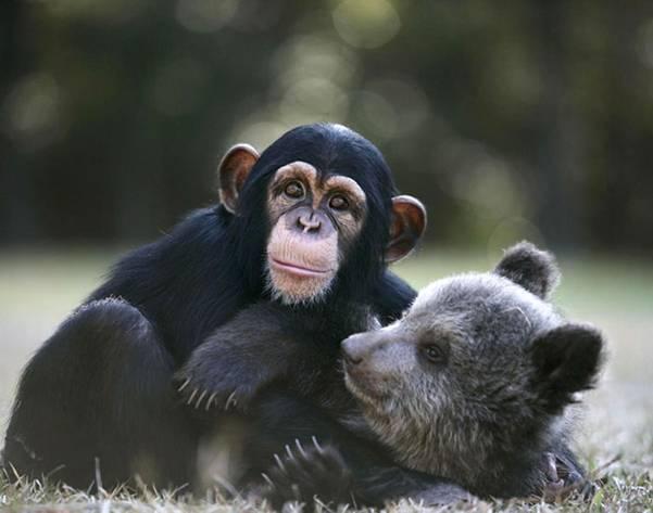 99 WOW: Heartwarming Friendships of Different Species Animalsصداقات تنعش  القلوب بين حيوانات من فصائل مختلفة