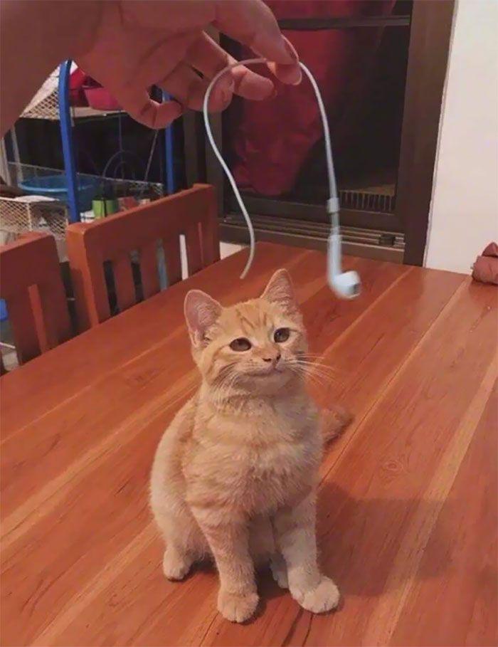 tingkah usil kucing (reddit.com/howaboutno69)