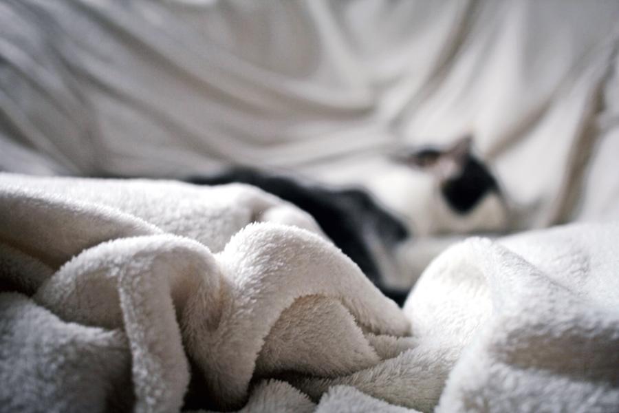 decke katze schlafen