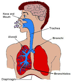 2nd grade natural science respiratory system tell me tell me 2nd grade natural science respiratory system ccuart Choice Image