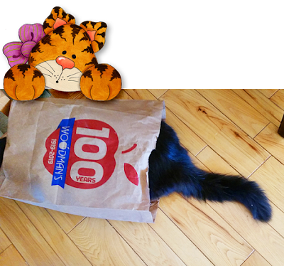 the cat is in the bag!