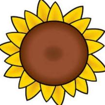 Gambar Bunga Matahari Dan Cara Menggambar Bunga Matahari Sketsa Dan Lukisan Menggunakan Pensil Kuas Atau Komputer Fourwedhe
