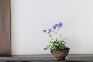 ヒダカハナシノブとシロナズナとスズメノヤリの寄せ植えの山野草盆栽
