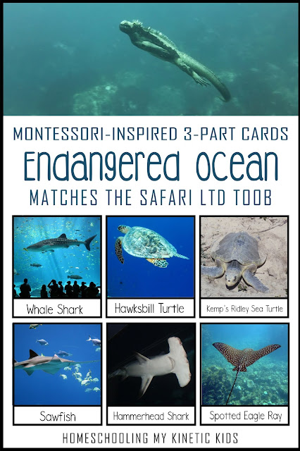 Learn about conservation as you explore and play with Safari Ltd Endangered Marine Animals toob.  Free printable matching cards for the toob.