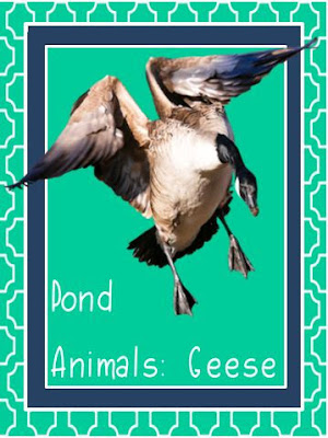 http://www.biblefunforkids.com/2018/07/god-makes-pond-animals-geese.html