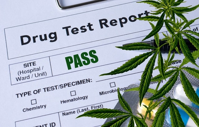 legalized cannabis effect marijuana drug testing