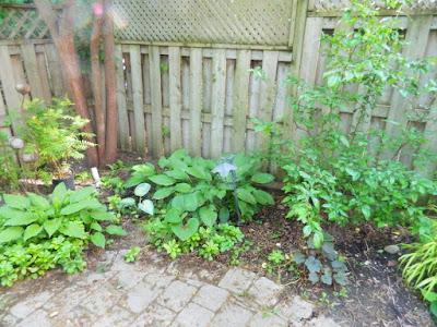 Cabbagetown Toronto shade garden with new perennials before Paul Jung Gardening Services