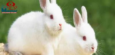 كيفية وخطوات تربية الأرانب Rabbits