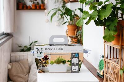 zestaw do uprawy hydroponicznej nelson garden