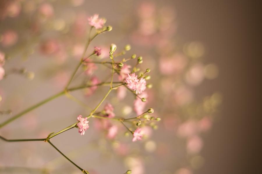 Blog + Fotografie by it's me   fim.works   Flower Friday   Detailaufnahme Rosa Schleierkraut