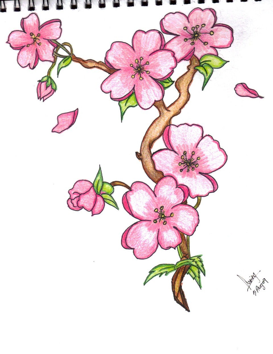 Pictures Of Flower Drawings - Beautiful Flowers