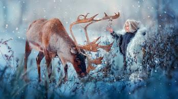 Raindeer with Child, Snow, 4K, #4.570