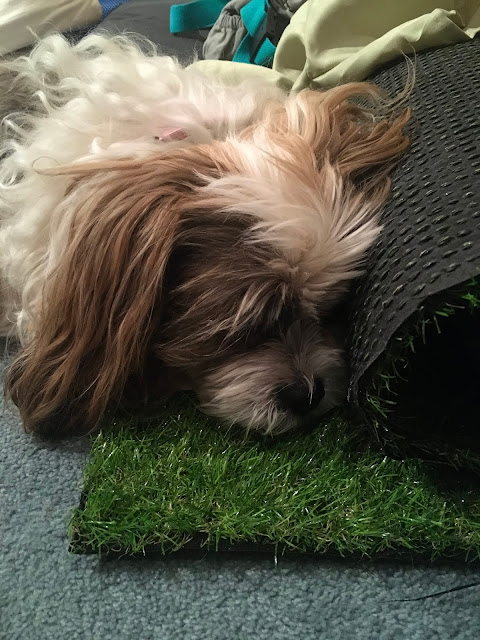 Chanel's obsession with fake grass