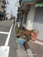 Flower pots along a narrow street, Tokushima, Shikoku, Japan