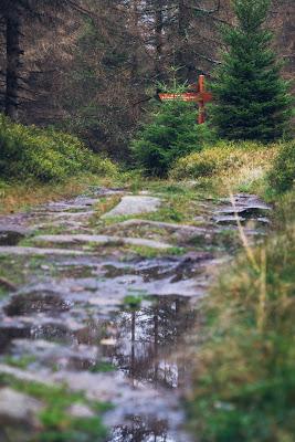 Herbstwanderung im Harz | Torfhaus – Eckerstausee – Bad Harzburg 04